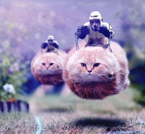 funny-star-wars-speeder-bike-cats-lolcats-1.jpg