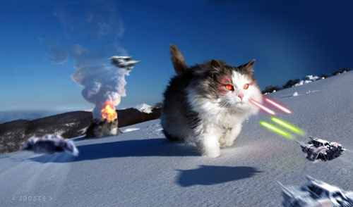 star-wars-kitty-3-1.jpg