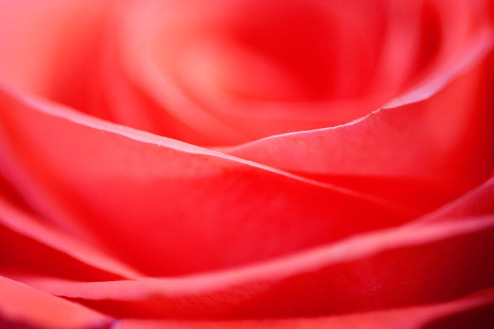 Rose-ECU-2.jpg