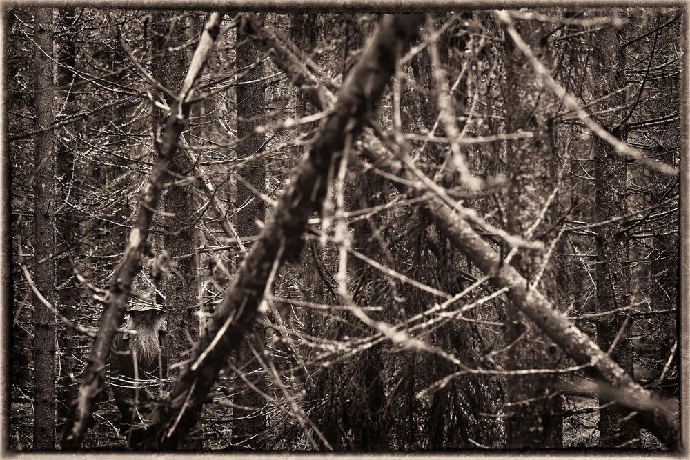 _MG_5590-SA-i-skog-BW-Sepia-On-1500px-KN.jpg