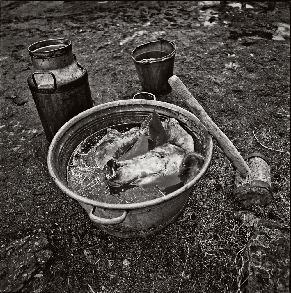 Grishuvud-i-balja-Hycklinge-1991-03-BW-Sepia-1500px-KN.jpg