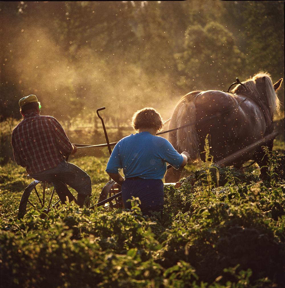 Life and death of a Farmer