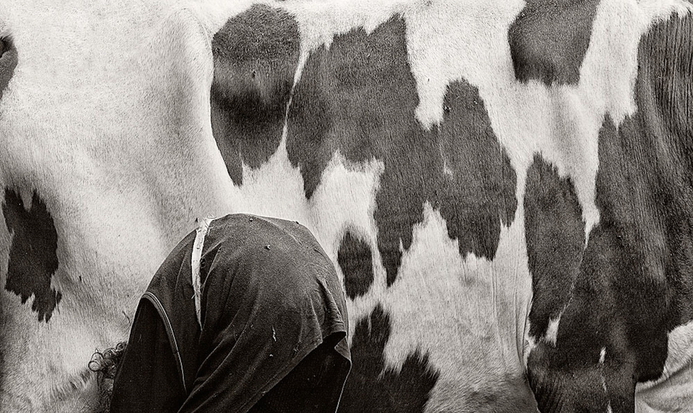 Women with Cows