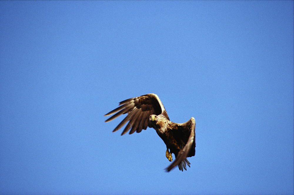 Eskil-flyger-och-kollar-noga-fotgrafen-1500px-KN.jpg