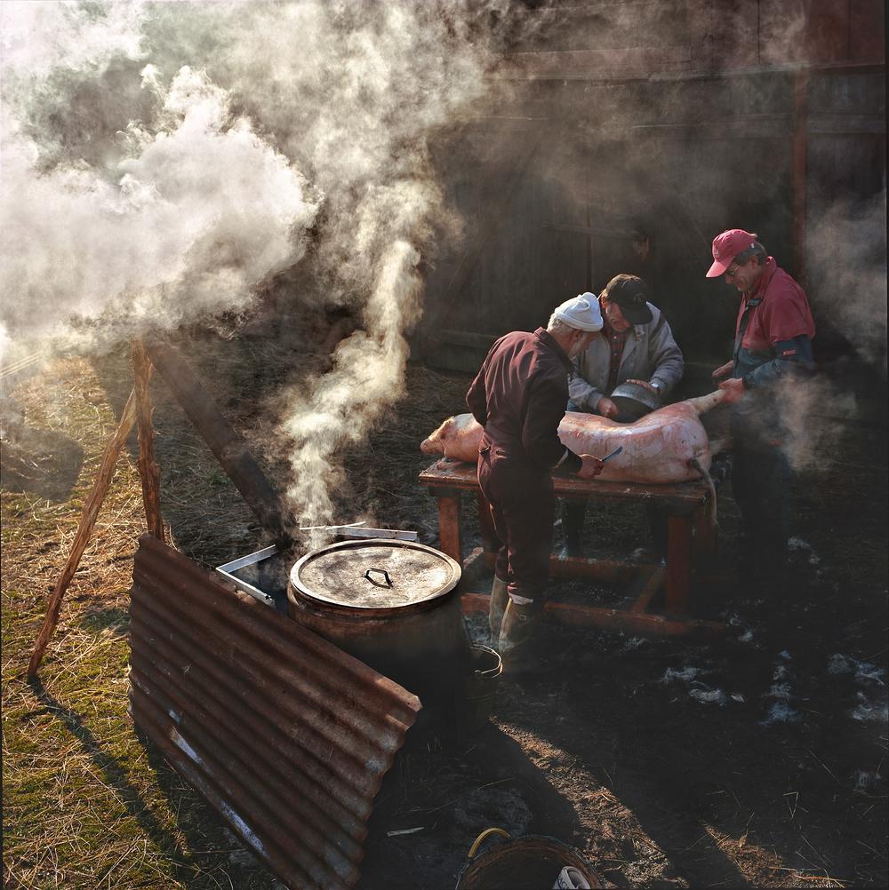 Klubbad-gris-skållas-Rök-Ånga-Hycklinge-1994-04-On-Arkam-DynC-KN2.jpg