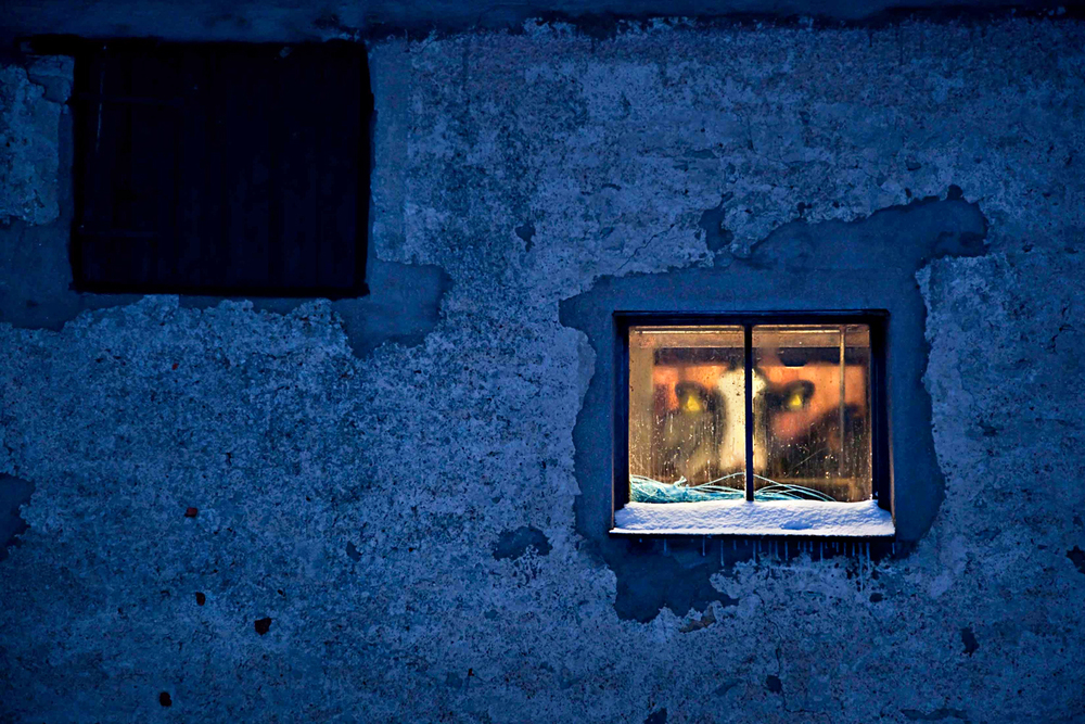 _MG_8634-Mjölkko-Fönster-Kväll-1500px.jpg