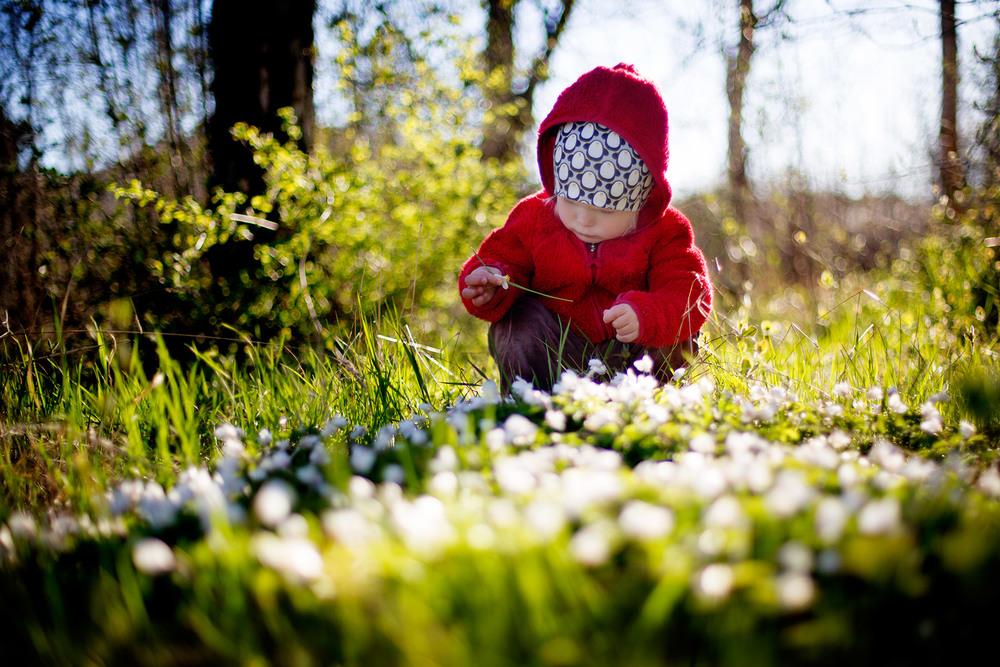 blogg-160420bertilvitsippor2.jpg