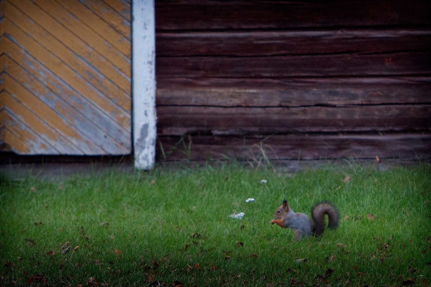 blogg-151015mikaelniemi4