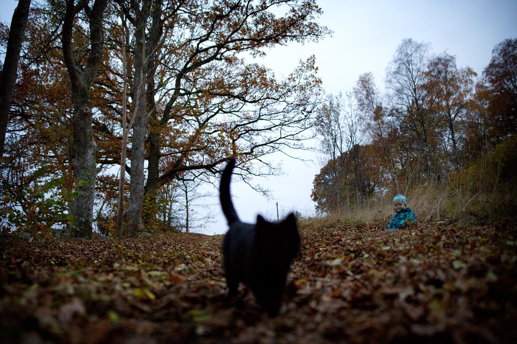 blogg-151030biogoteborg9