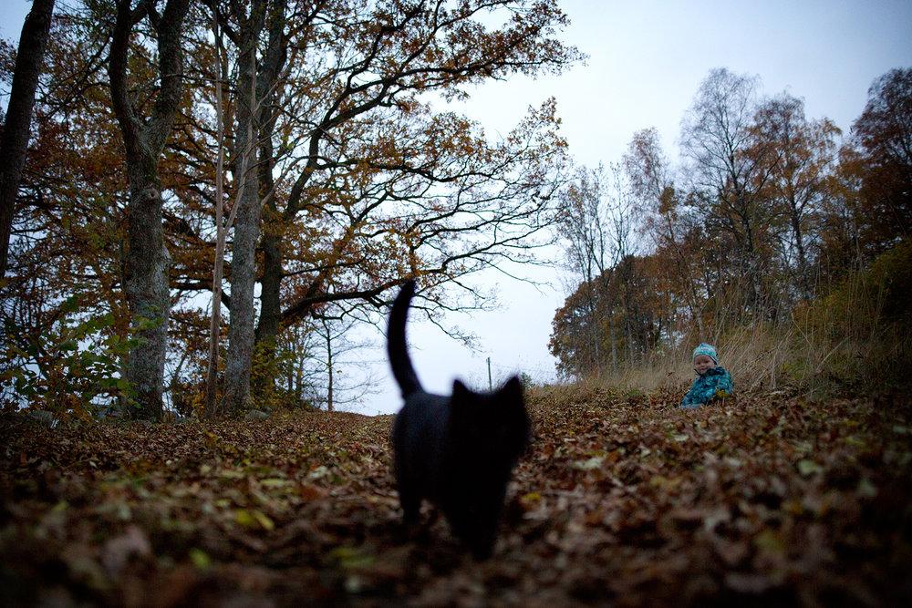 blogg-151030biogoteborg9.jpg