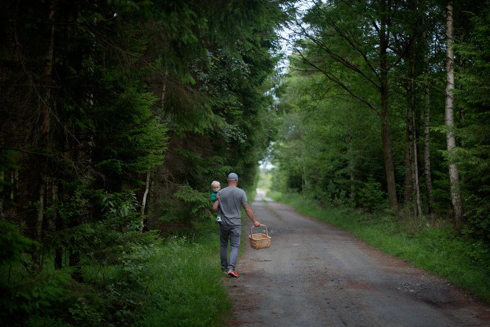 blogg-150712svampskog1.jpg