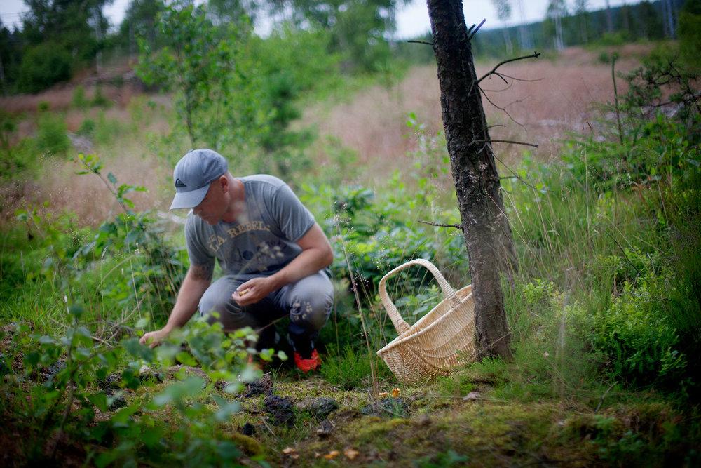 blogg-150712svampskog3.jpg