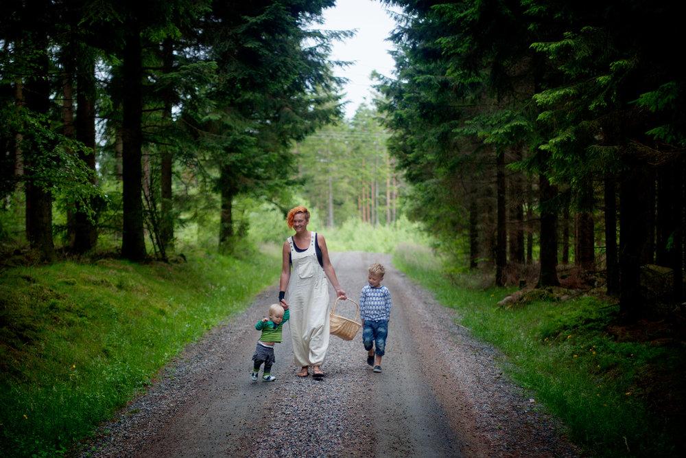 blogg-150712svampskog6.jpg