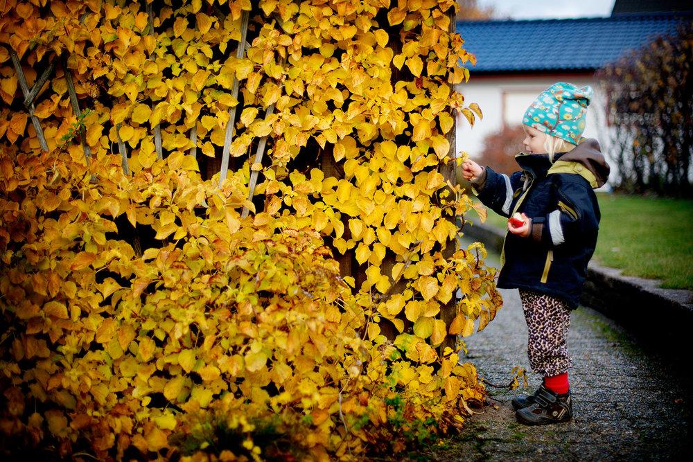 blogg-161024bertiltradgarden6.jpg