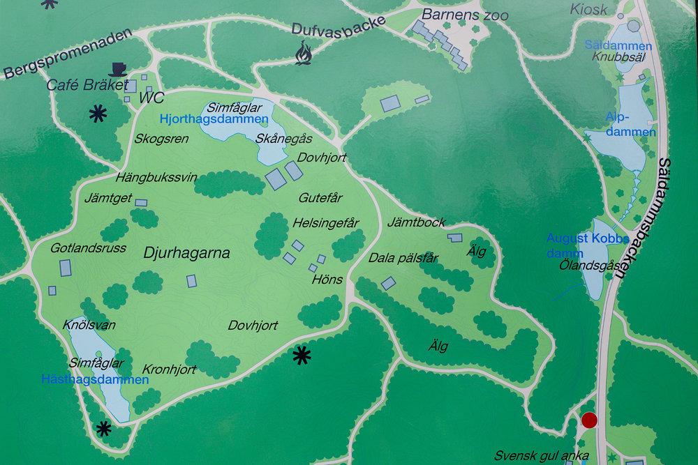 blogg-170412slottsskogen1.jpg