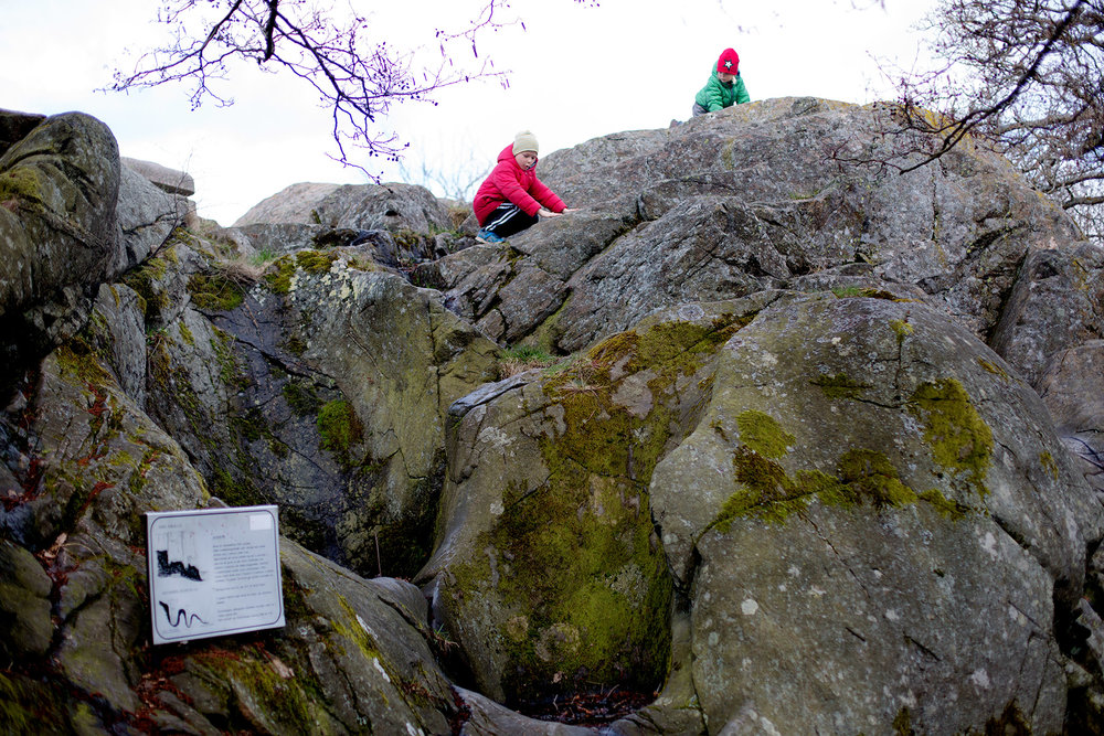 blogg-170412slottsskogen11.jpg