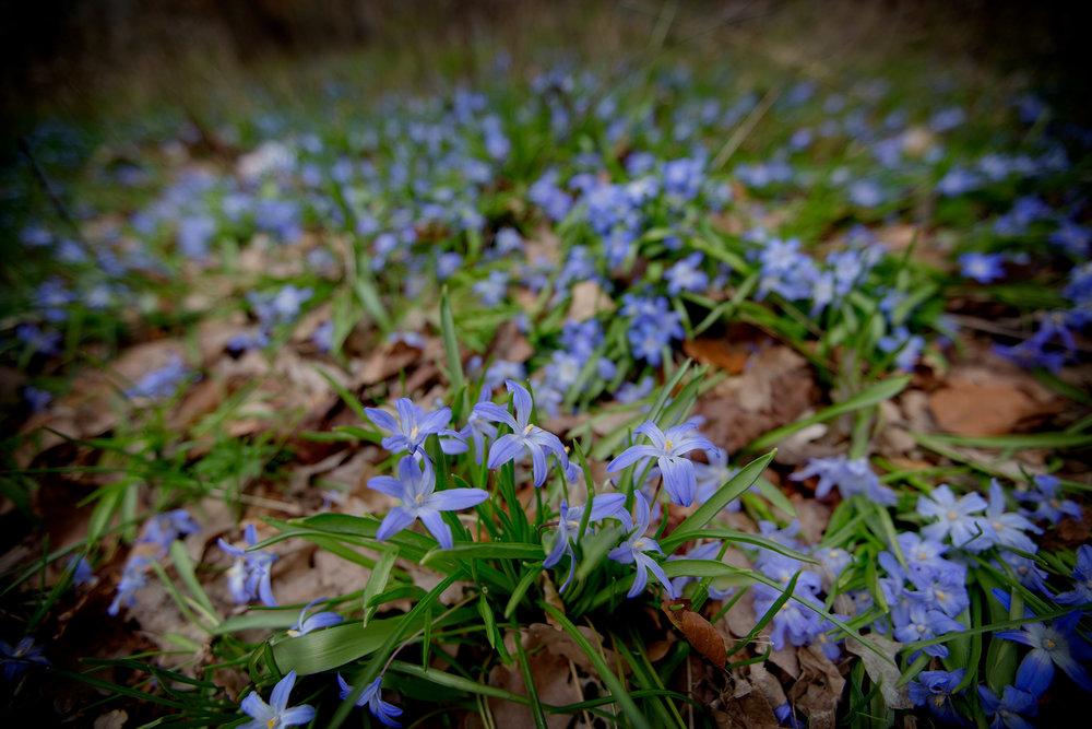 blogg-170412slottsskogen20.jpg