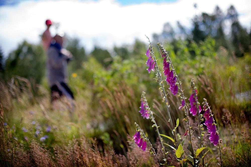 blogg-170703blabarsskogen1.jpg