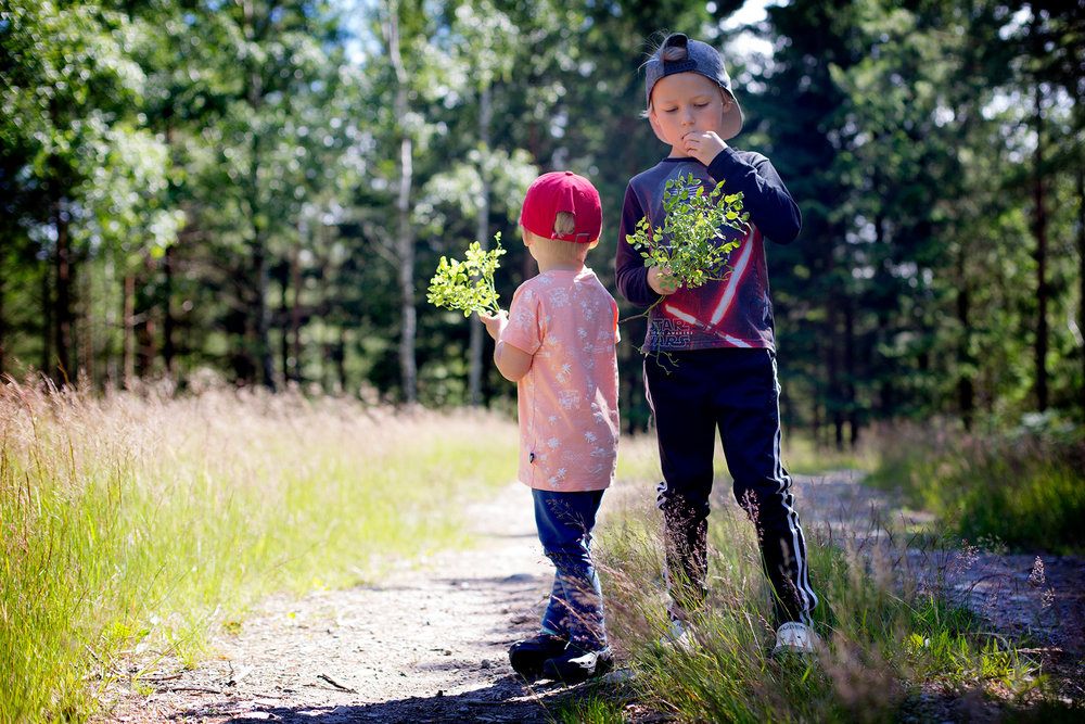 blogg-170703blabarsskogen3.jpg