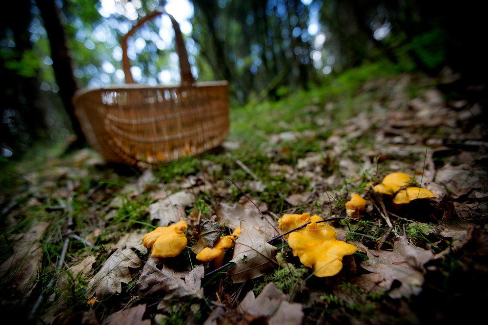blogg-170813svampskog3.jpg