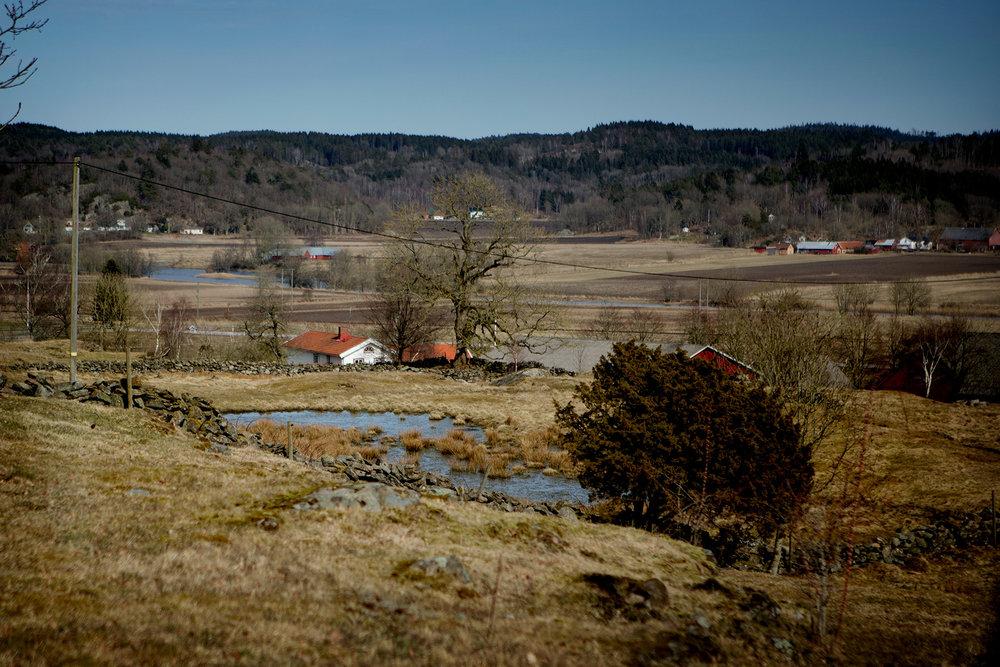 blogg-180407tharstorpaskogen1.jpg