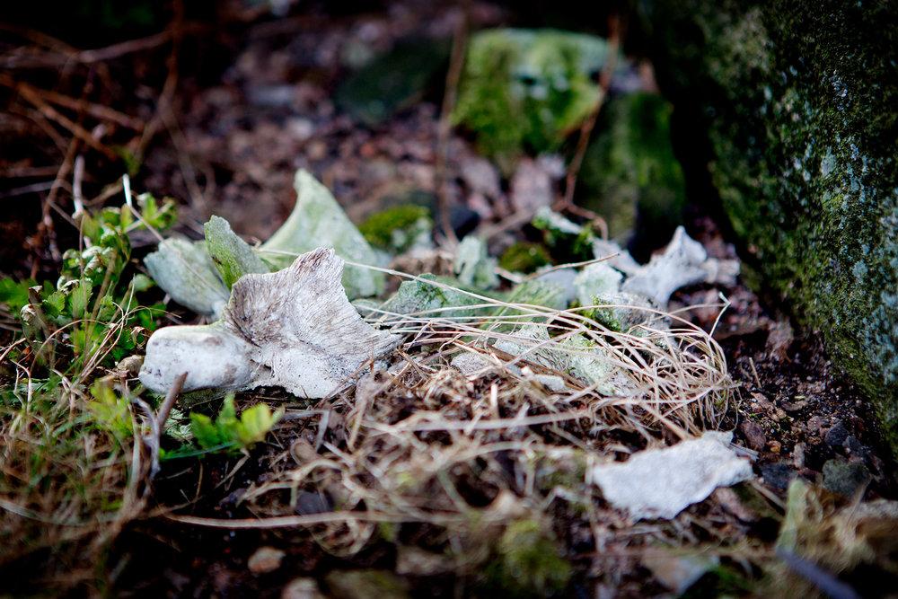 blogg-180407tharstorpaskogen9.jpg