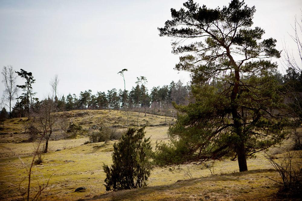 blogg-180407tharstorpaskogen14.jpg