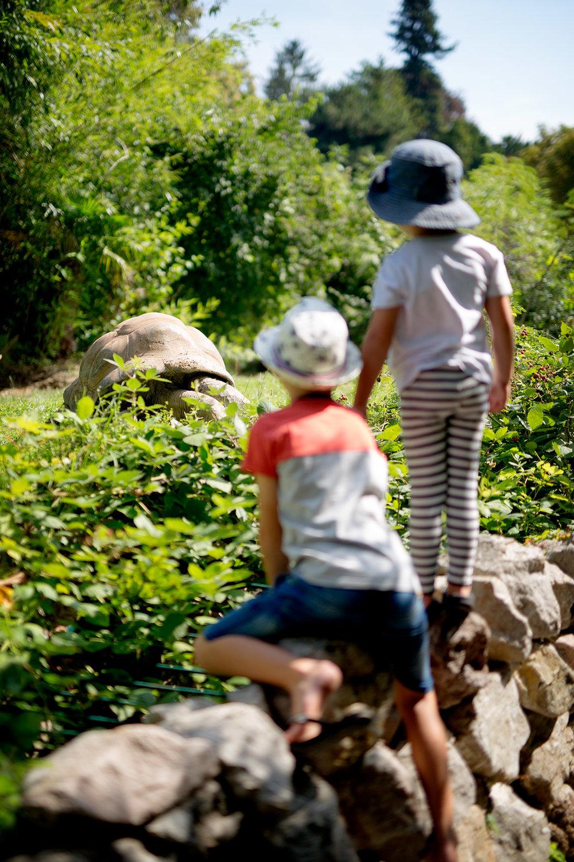blogg-180803tiergarten5.jpg