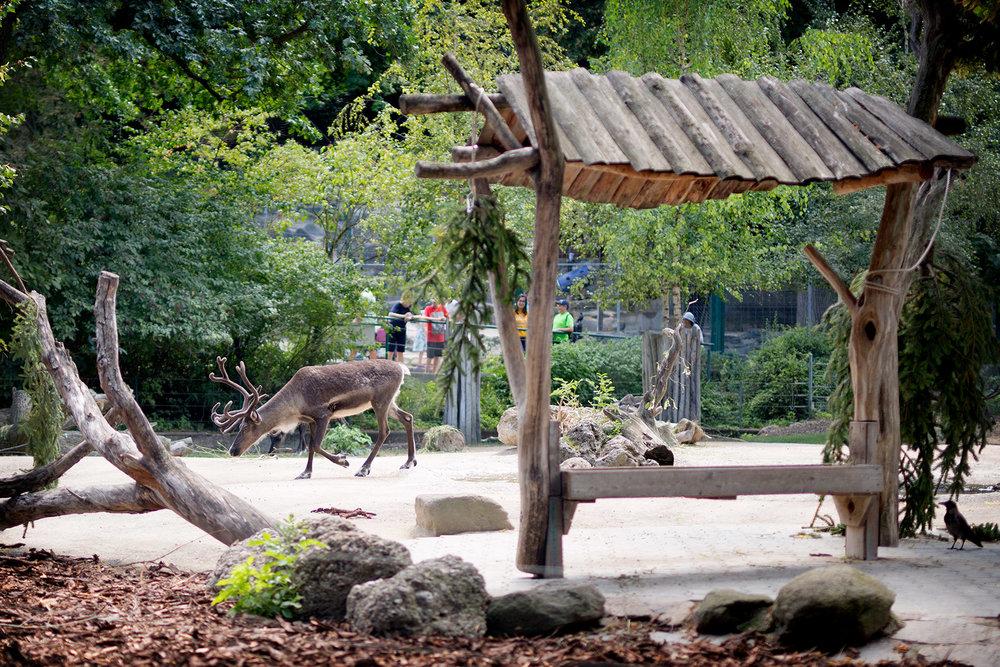 blogg-180803tiergarten32.jpg