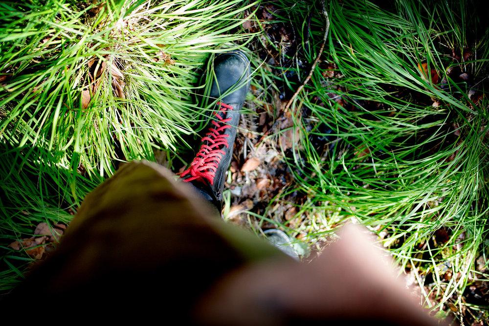 blogg-180826ambjorntorpskogen4.jpg