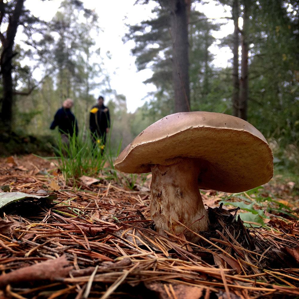 blogg-180930svampskog1.jpg
