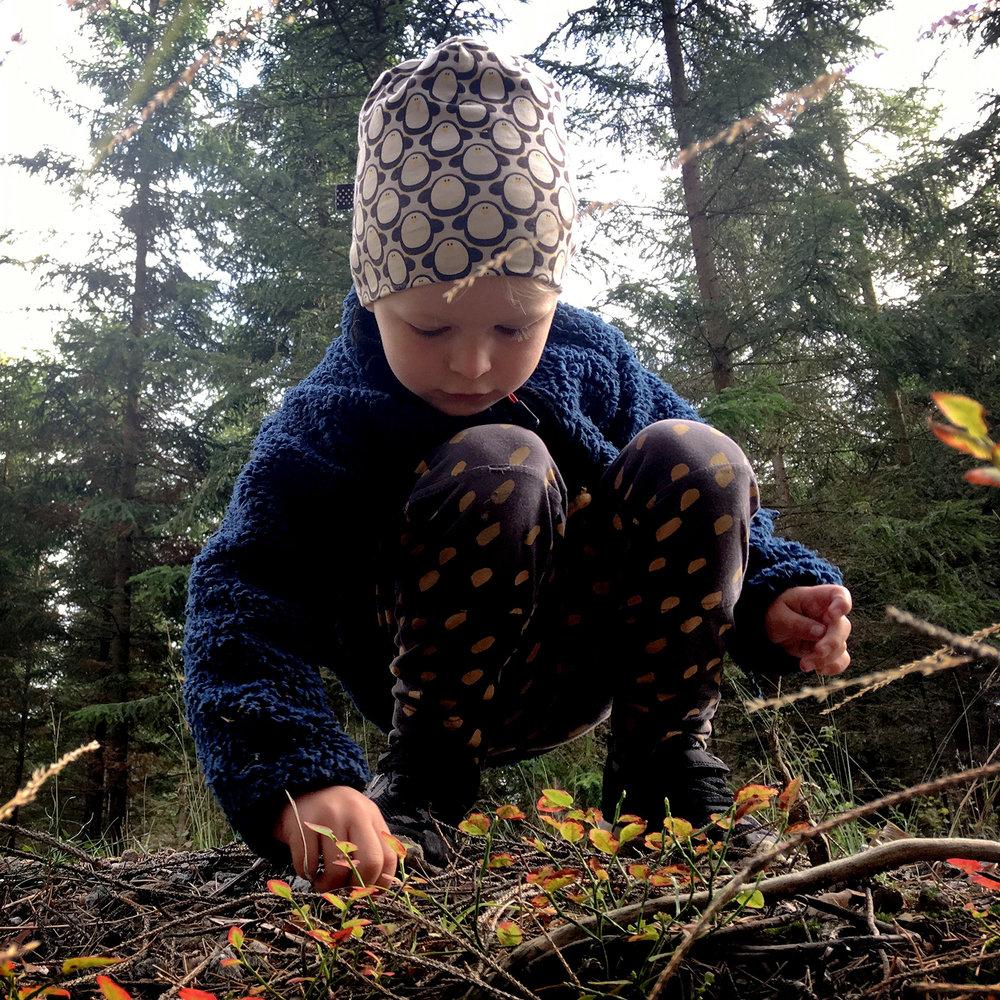 blogg-180930svampskog6.jpg