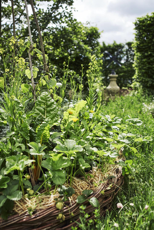 Belmond Enchanted Gardens 2017_0632.jpg