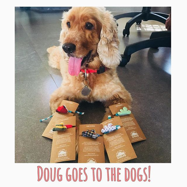 Doug goes to the Dogs! Ugo patiently modelling for us📷  To buy Doug for your best buddy visit www.onceuponadoug.com