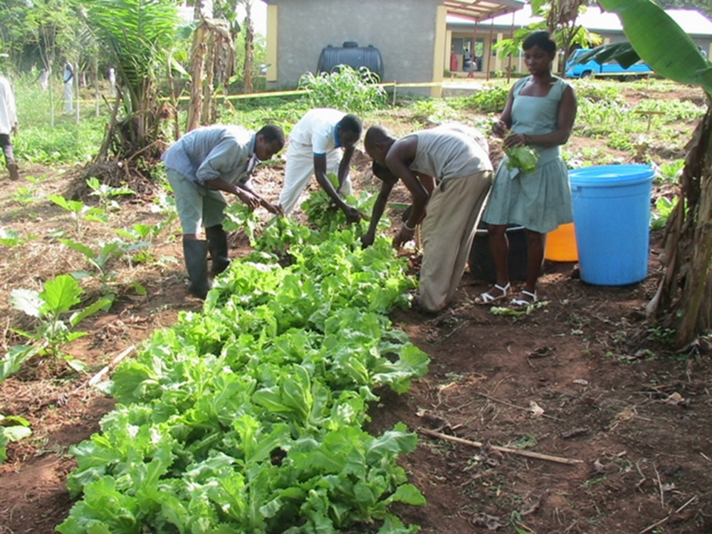 Agriculture (7).png