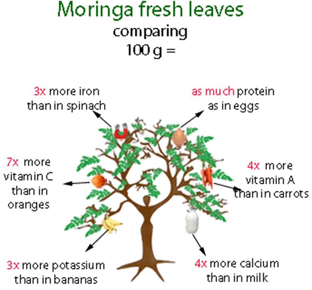 Moringa (2).png