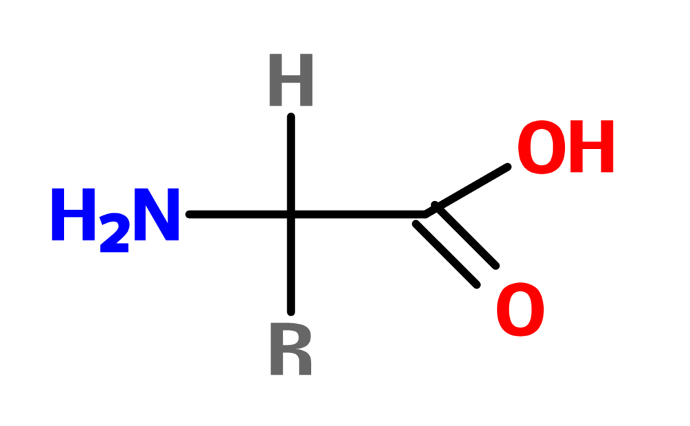 Figure 13. General structure of an amino acid.