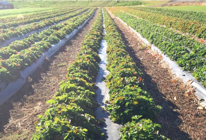 David Pike's Farm --Farmington, Maine, OCTOBER 2015