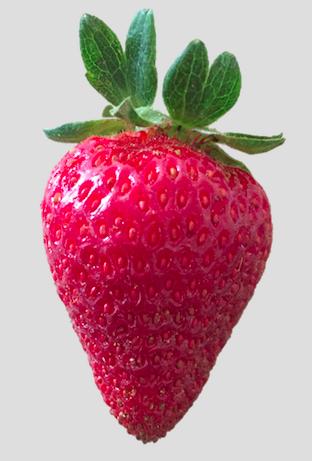 'Albion' fruit