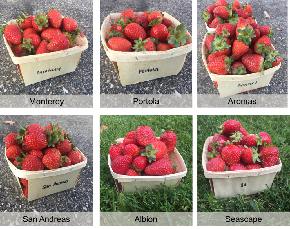 variety fruit.png