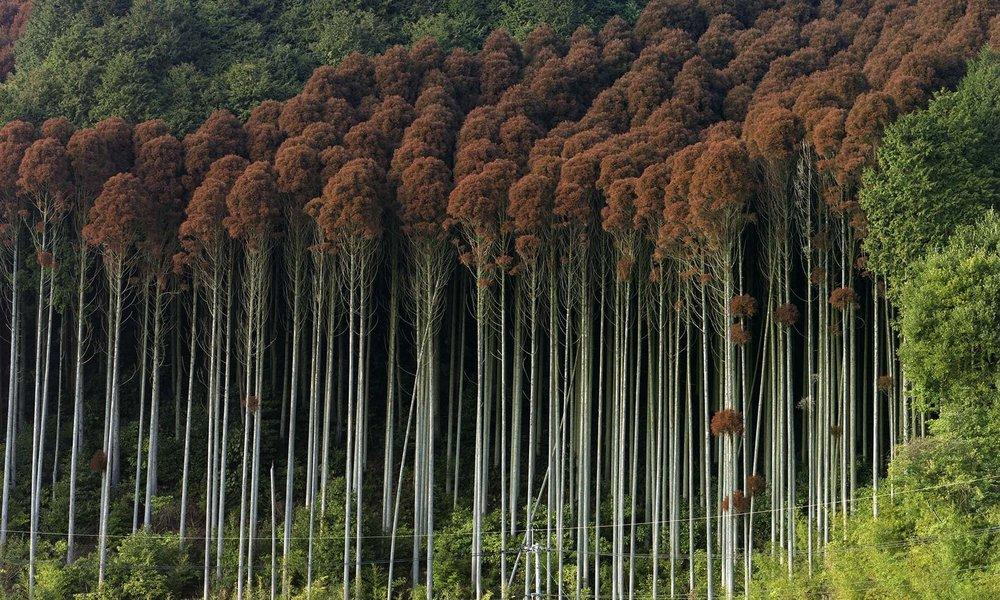 Photography: Toshio Shibata