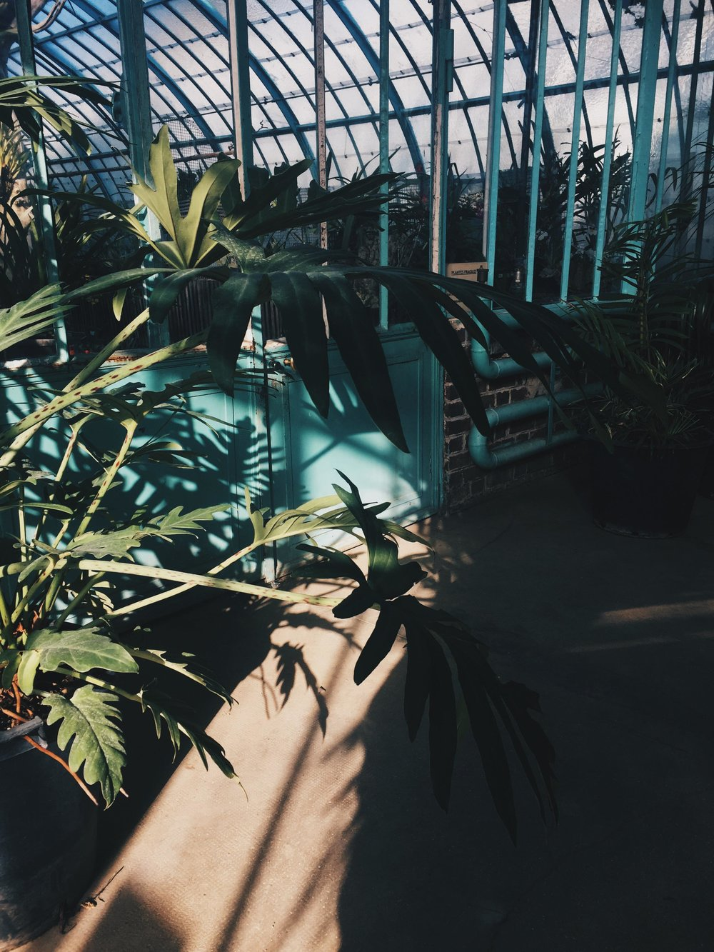 Haenke_Botanical Gardens_Paris III