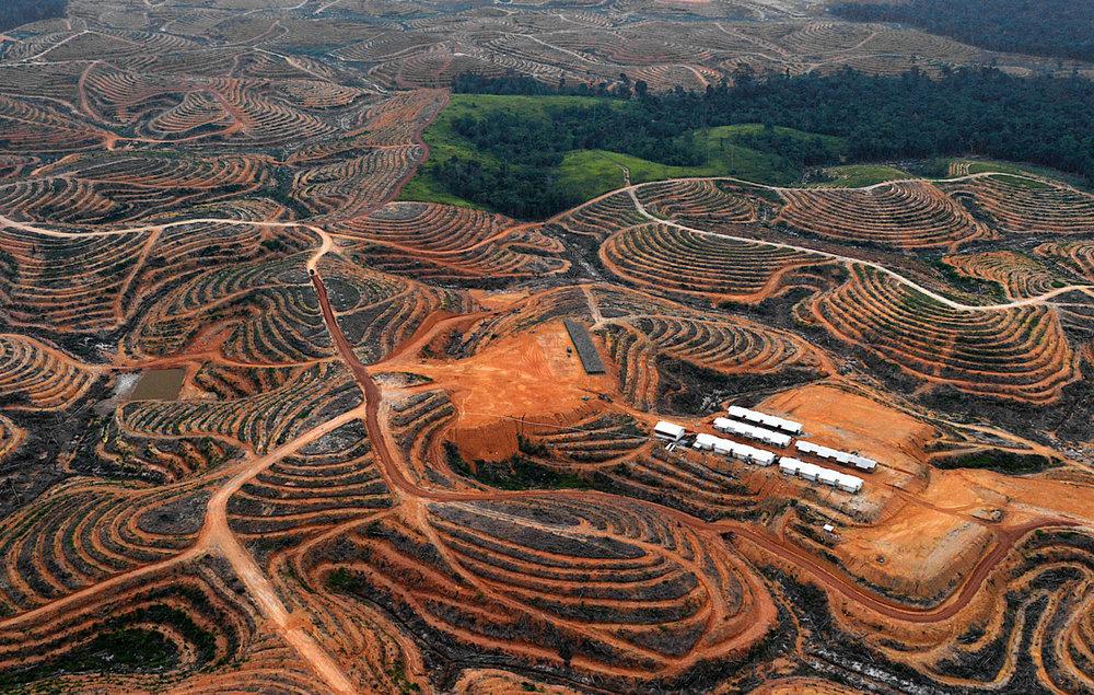 Vypleněná lesní plocha v Borneu připravena pro palmovou plantáž. Zdroj: Bay Ismoyo