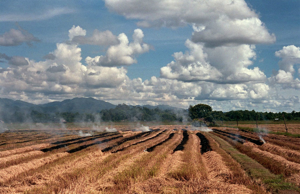 Normal Nuances: Rice Field Burning 2   Film Photography, 17x11 in., 2018