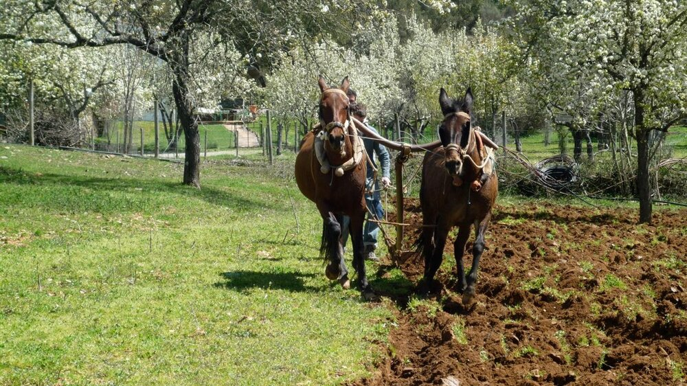 Ploughing between the Cottages