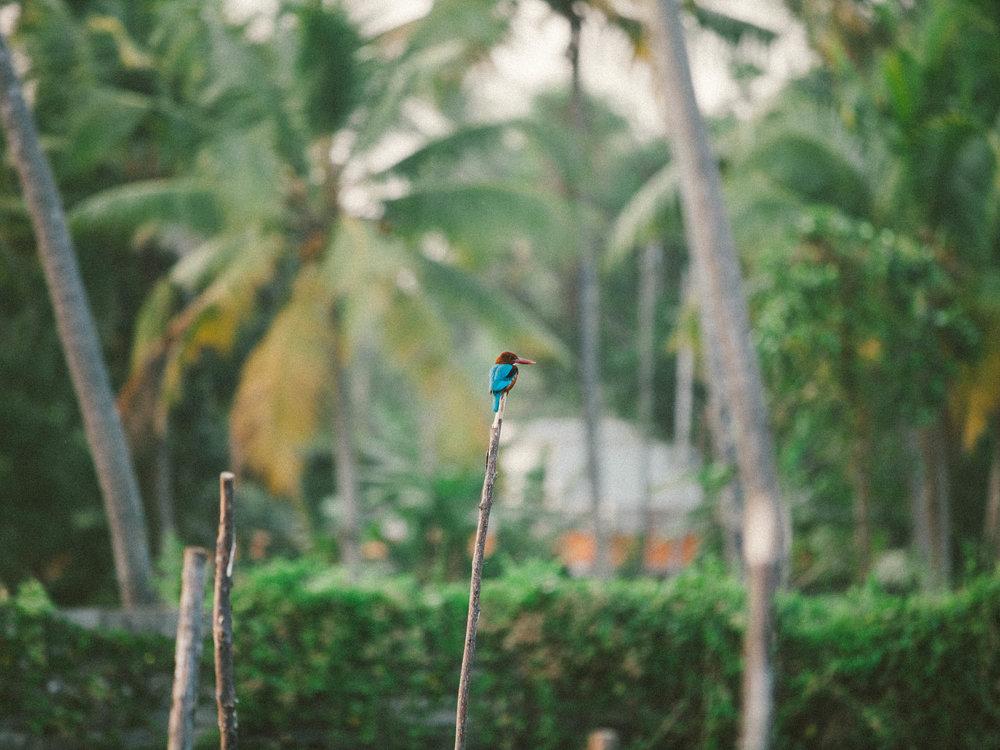 Julian-Ward-India-08.jpg