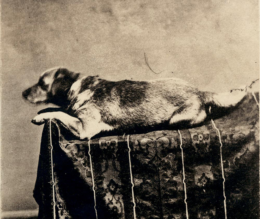Abraham Lincoln's dog Fido.