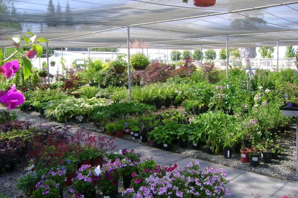 Willow Gardens Nursery Image 02