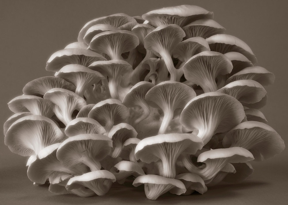 ©HelenJones-Clustered Perfection Fungi.jpg