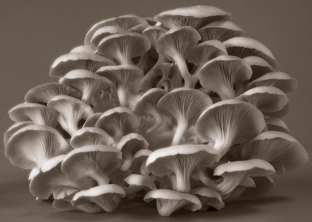 ©HelenJones-Clustered Perfection Fungi.jpg